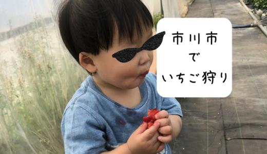 1歳児とおでかけ!いちご狩りなら楽しめた(市川編)
