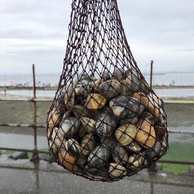 潮干狩り場で採った約1キログラムのあさり